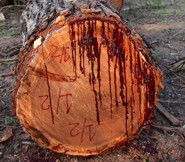 East African padauk is sometimes referred to as African teak due to ...